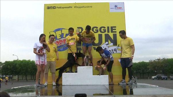 Nelle Filippine la tradizionale corsa di cani (e padroni)