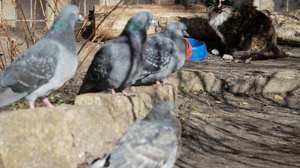 Insolite : un pigeon vendu plus d'un million d'euros aux enchères