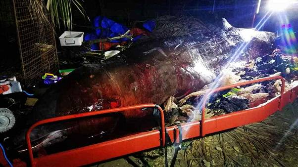 'Most plastic we have ever seen in a whale', say biologists after mammal dies