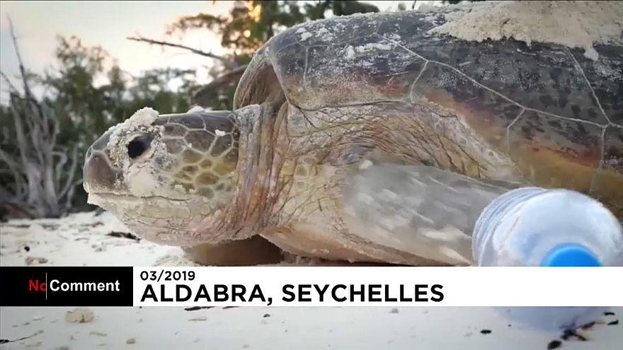 شاهد: تنظيف الشواطئ من البلاستيك في سيشل تحضيراً لتكاثر السلاحف البحرية
