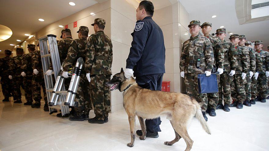 Çin masrafı kısmak için 'Sherlock Holmes' polis köpeklerini klonluyor