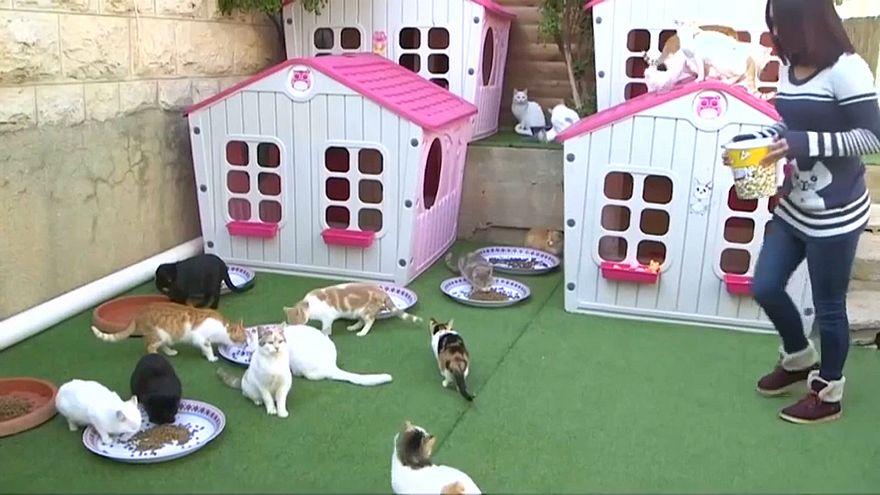 فيديو.. فلسطينية تحول حديقة منزلها إلى ملجأ حقيقي للحيوانات الضالة