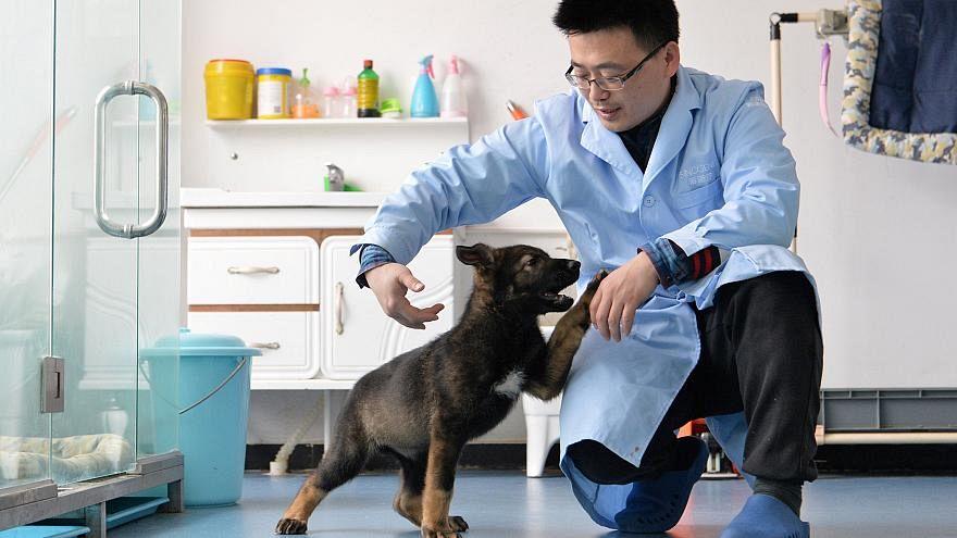 الكلبة المستنسخة بصحبة أحد العلماء الصينيين