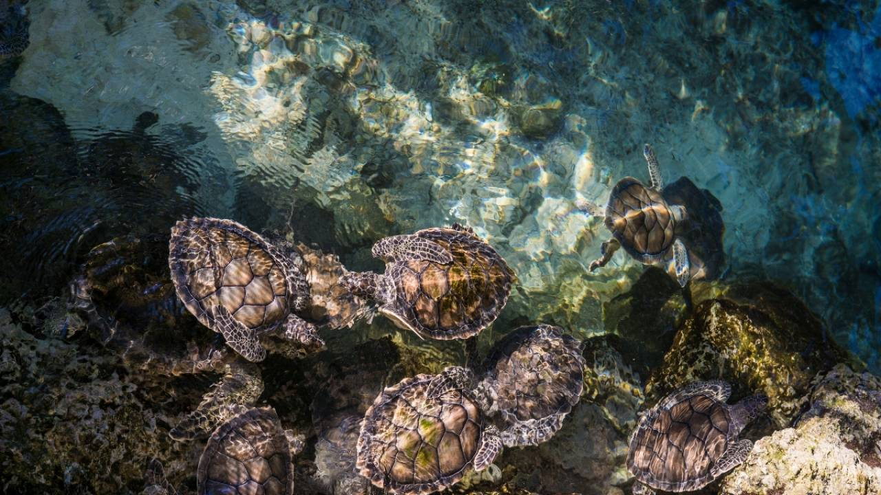 Baby-sitting turtles in Filicudi
