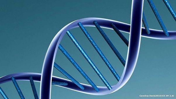 Des brins d'ADN