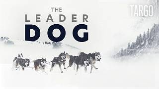 Watch in 360°: Dog-racing across the French Alps   TARGO
