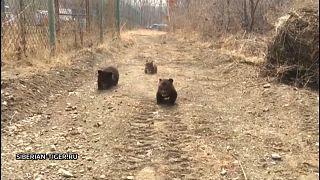 شاهد: ثلاثة دياسم في حديقة حيوان روسية بعد إنقاذها من الصيد غير الشرعي