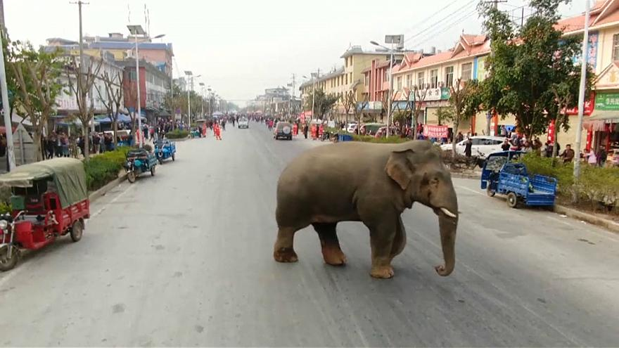 The elephant had been ousted by another male