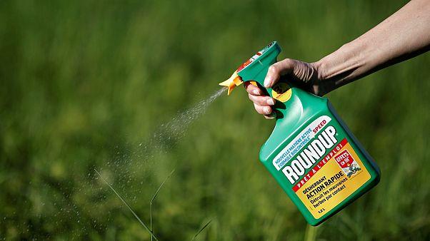 Rákkeltő szer miatt fizethet kártérítést a Monsanto