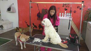 شاهد: افتتاح أول مركز تجميل للحيوانات الأليفة في العاصمة التونسية