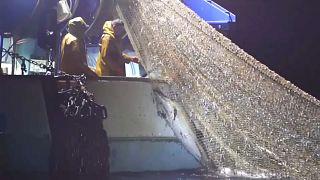 Pêche intensive : le massacre des dauphins continue