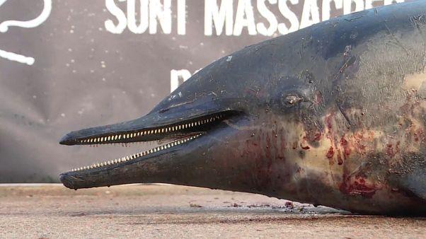 Массовая гибель дельфинов во Франции
