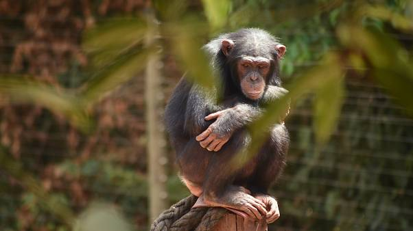 State of the Union: of chimps and men