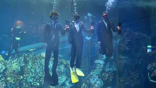 Aquarium begrüßt neue Angestellte mit einer Unterwasser-Zeremonie