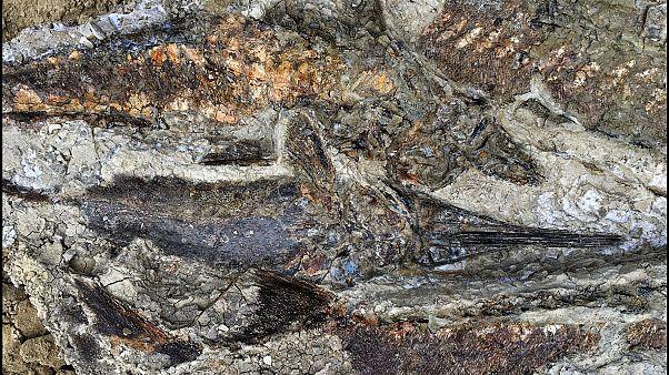 Απολιθωμένα ψάρια