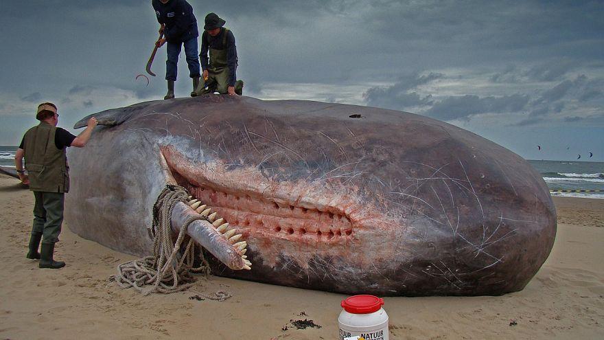 Magzata mellett 22 kg műanyagot találtak abban a bálnában, amit Szardínián sodort partra a víz