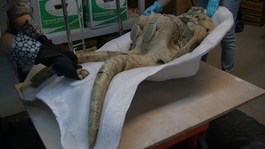 Jégkorszaki leleteket találtak Los Angelesben
