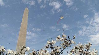 Kites fly over Washington Monument in D.C, cherry trees in full bloom