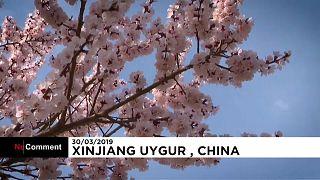 Cina, fa capolino la primavera