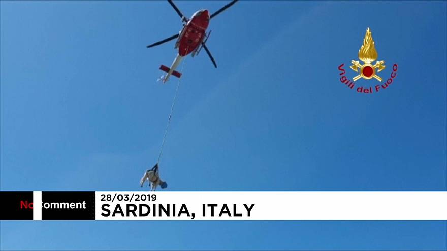 Udderly petrifying: Helicopter rescues stranded cow in Italy