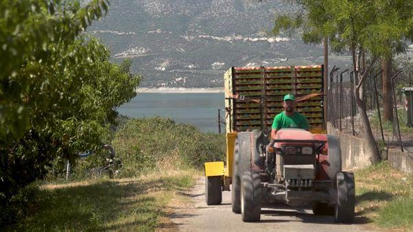 Единая сельскохозяйственная политика ЕС