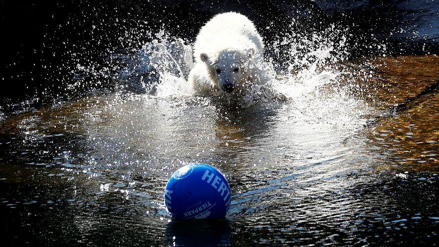 توله خرس برلینی به افتخار حامی مالی خود «هرتا» نام گرفت