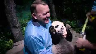 """Danimarka'da muhalefet, Çin ile yapılan """"panda diplomasisine"""" tepkili"""