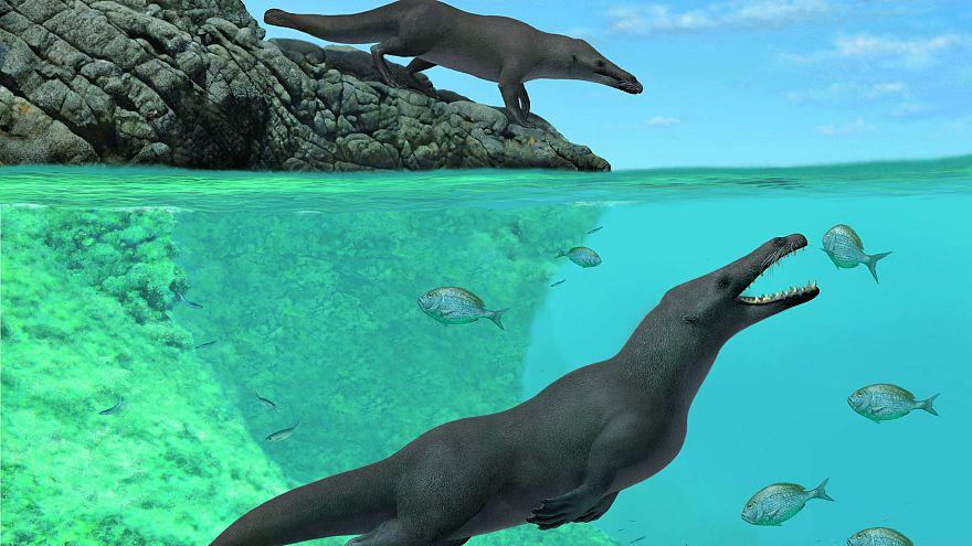 صورة توضيحية لحوت برمائي ب 4 أرجل عاش في البحر والبر قبل نحو 43 مليون عام