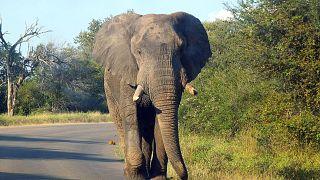 Von Elefanten totgetrampelt und von Löwen gefressen