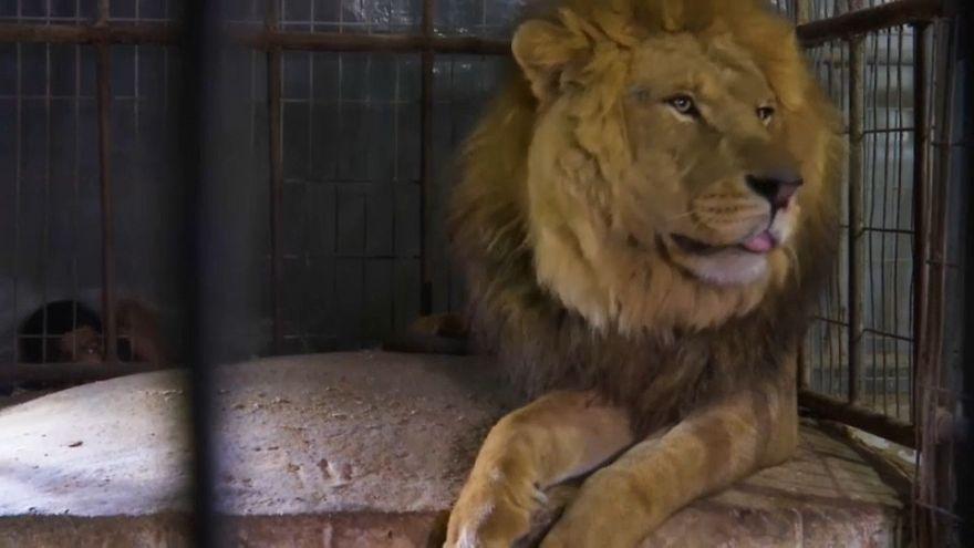 شاهد: حيوانات من غزة تجد مأوى جديدا في حديقة بالأردن بعد نفوق بعضها