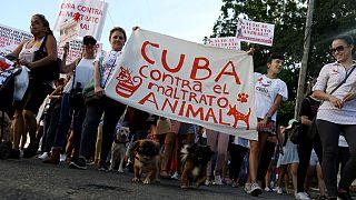 اولین تظاهرات «غیر دولتی» کوبا: صدها نفر در حمایت از حقوق حیوانات راهپیمایی کردند