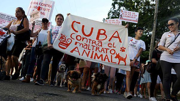 شاهد: كوبا تسمح بتنظيم مسيرة لنشطاء محبين للحيوانات