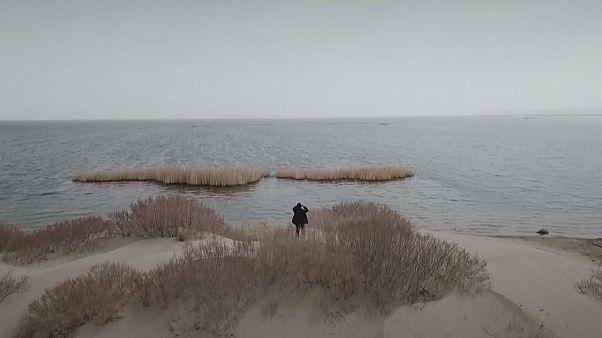 Студенты высаживают деревья, чтобы спасти Аральское море