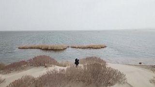 Gli studenti piantano alberi per salvare il Lago d'Aral che scompare