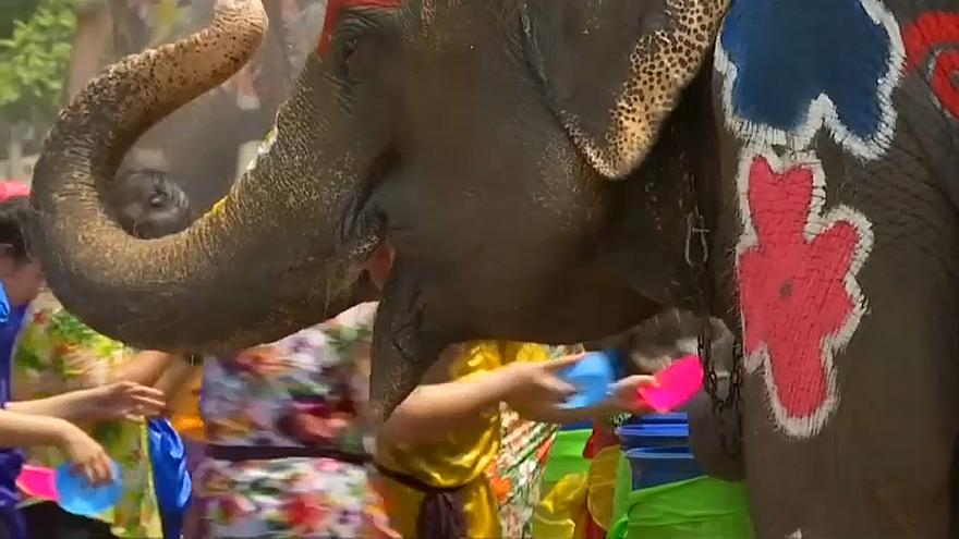 The elephants are painted with brightly coloured flowers for the occasion