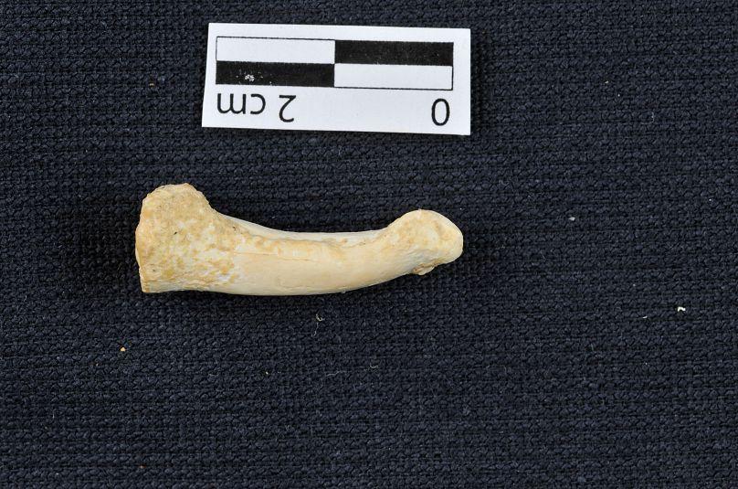 Vía Reuters / Proyecto de Arqueología de la Cueva del Callao