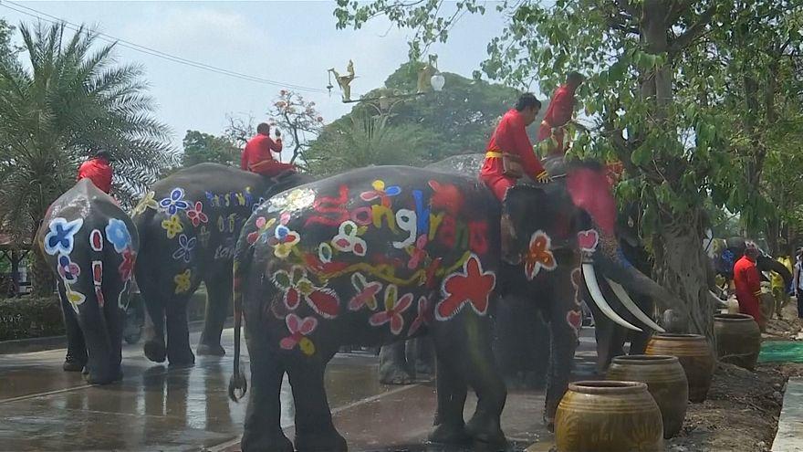 Tailandia celebra el Año Nuevo con una ducha de elefantes multicolores