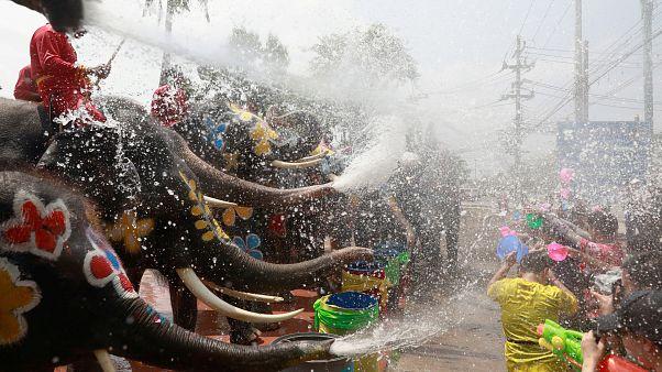 Uomini contro elefanti: la grande battaglia d'acqua in Thailandia