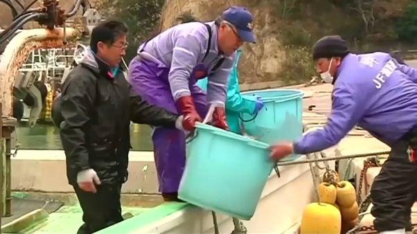 Güney Kore DTÖ mücadelesini kazandı: Japon deniz ürünlerine kısıtlama sürecek