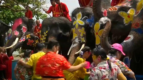 گلچین ویدئوهای هفته؛ از آببازی با فیلها در تایلند تا سیل در برزیل