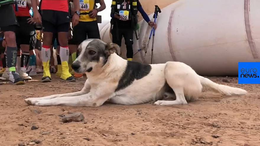 Marathon des Sables: Meet Cactus the dog who just ran one of the world's toughest races