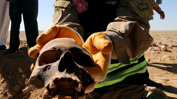 جمجمة آدمية عُثر عليها بالمقبرة الجماعية