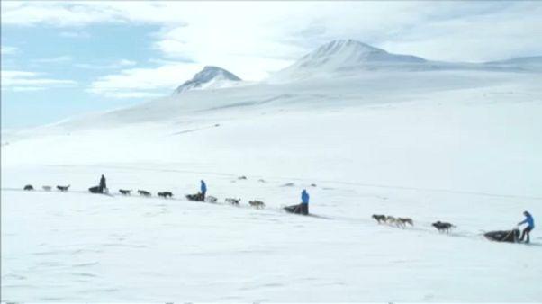 سورتمه سواری با سگ در نزدیکی قطب شمال