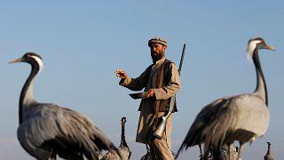Video | Savaşın gölgesinde ayakta tutulmaya çalışılan meslekler: Bir Afgan avcının turna avı