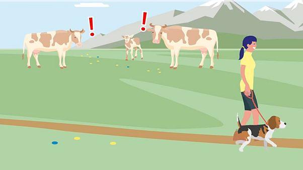 Österreichs Almen: Regeln für Kuh, Hund und Mensch