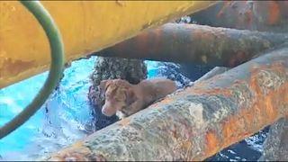عوض اخراج النفط...عمال منصة بحرية يخرجون كلبا في خليج تايلاند