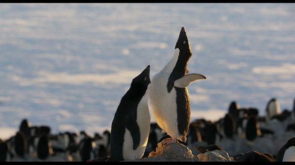 بطريق يحمل دفئا إلى قلبك حتى لو كنت في القطب المتجمد