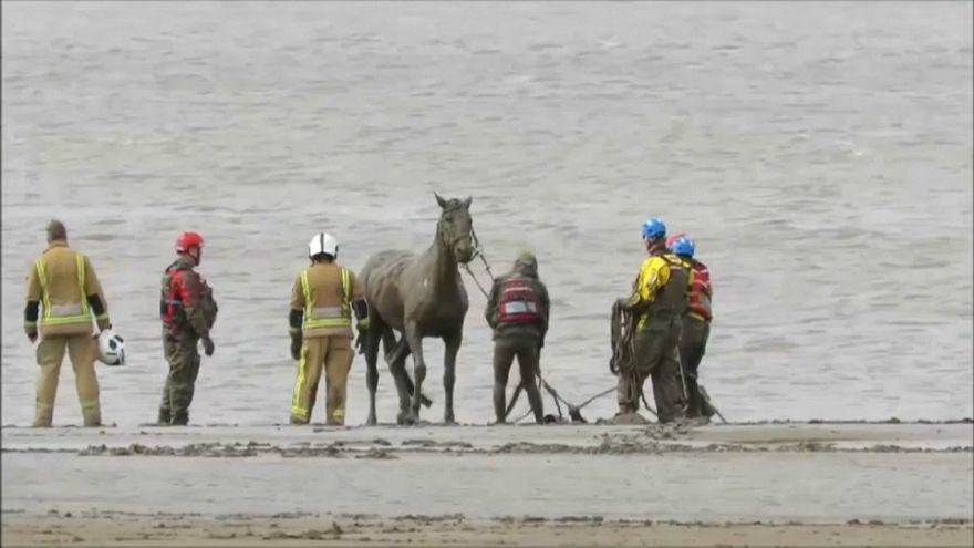 ویدئو؛ نجات اسب گرفتار در گل و لای ساحل برنهام بریتانیا