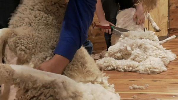 تزايد أعداد العاملات الاستراليات بتصنيع الصوف