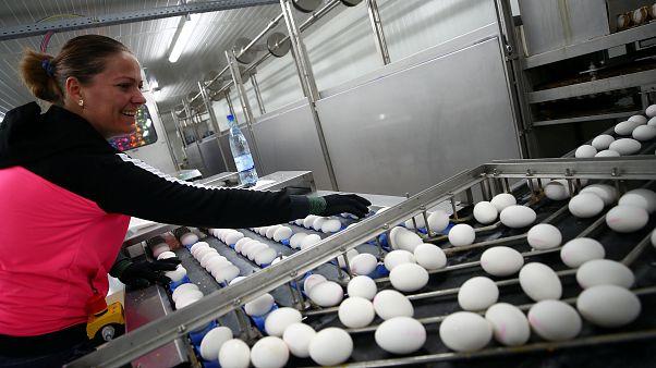 Húsvét előtt az éves fogyasztásunk egyharmadát szerezzük be tojásból